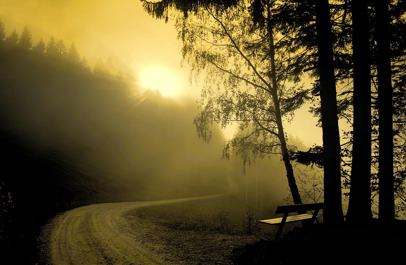 Golden Light by focusgallery