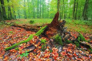 Autumn Colours iv by Regadenzia