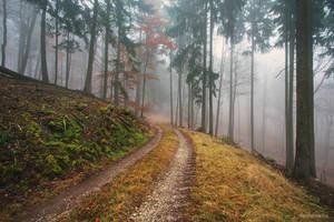 Haunted Woods IV by Regadenzia