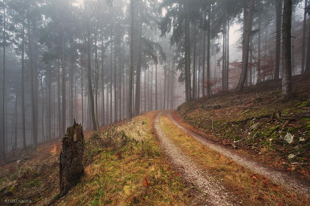 Haunted Woods V by Regadenzia