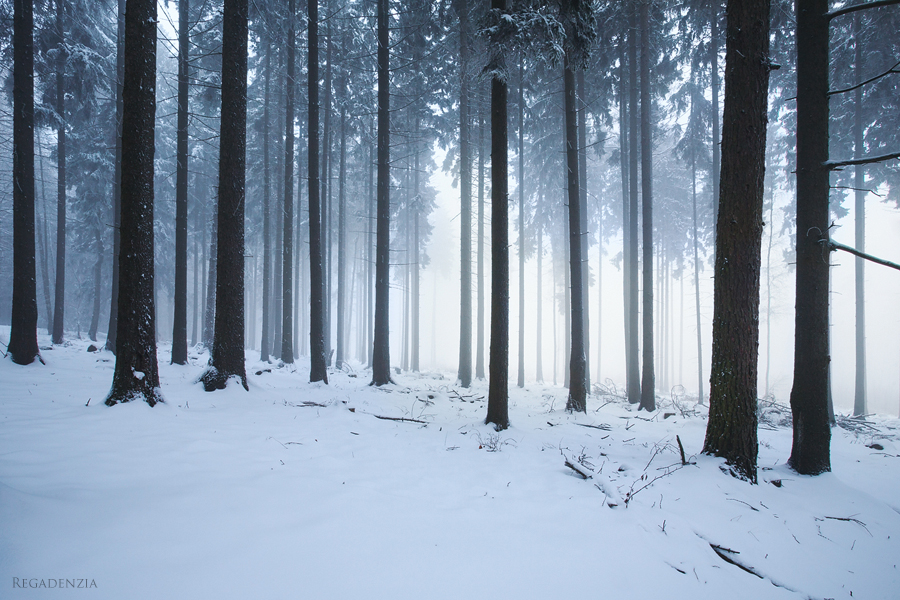 Winter Forest by Regadenzia