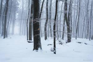Winter Forest 2 by Regadenzia