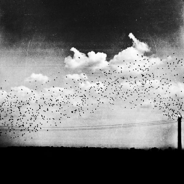 The birds procreator by iNeedChemicalX
