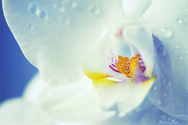 A Blooming Heart - Wallpaper