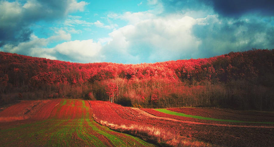 Homeland by iNeedChemicalX