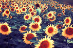 Field of little joys