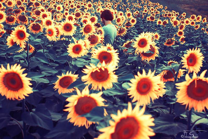 Field of little joys by iNeedChemicalX