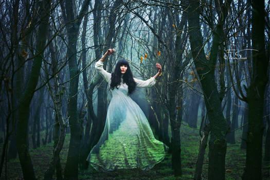 The Forest Whisperer