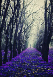 Arcade of the Enchanted Trees II
