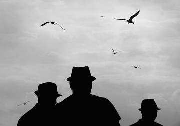Dancing birds by iNeedChemicalX