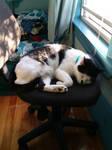 Cat Nap by Kaoyru