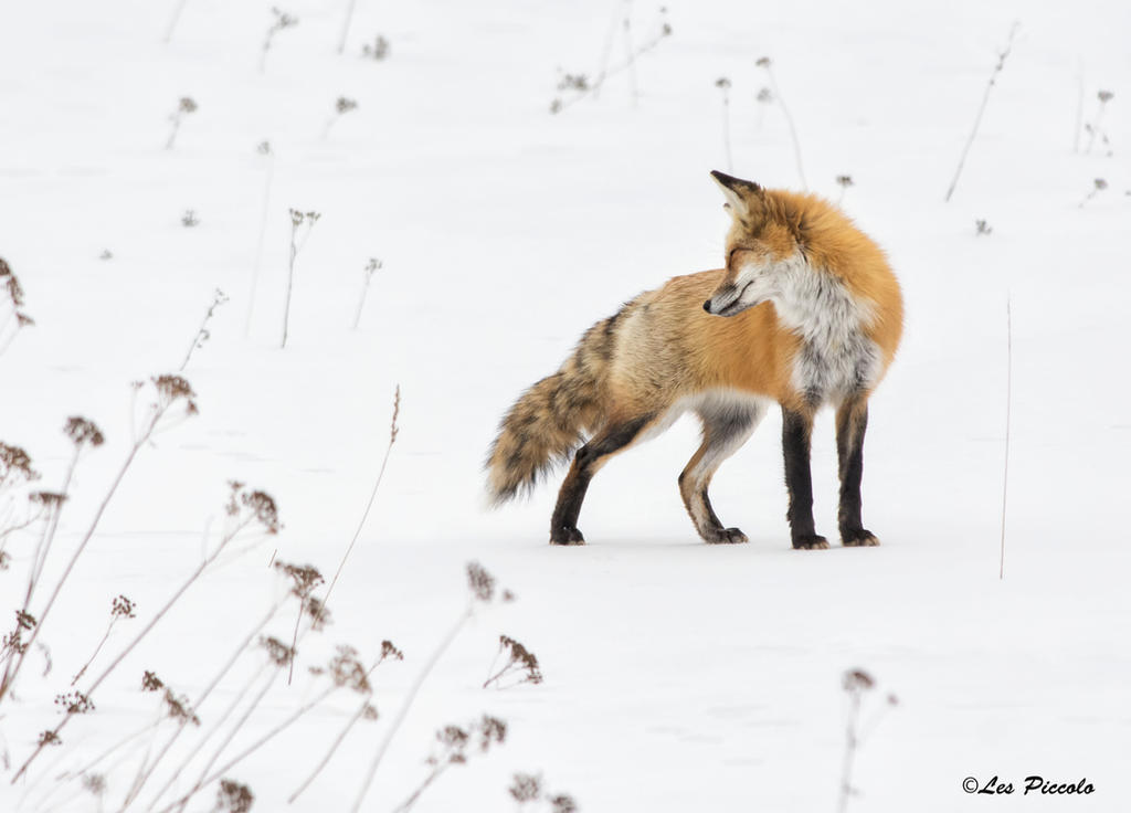 On The Hunt by Les-Piccolo