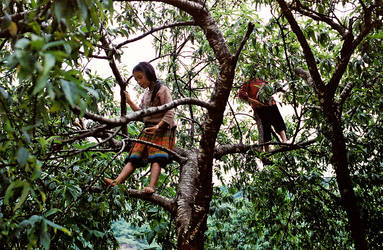 Black Hmong Kids