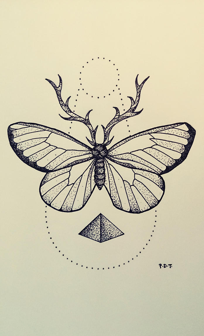 Line Drawing Butterfly Tattoo : Butterfly by aephylis on deviantart