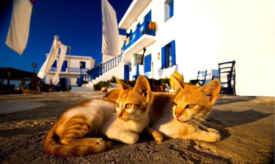 Cats of Nisyros by catman-suha