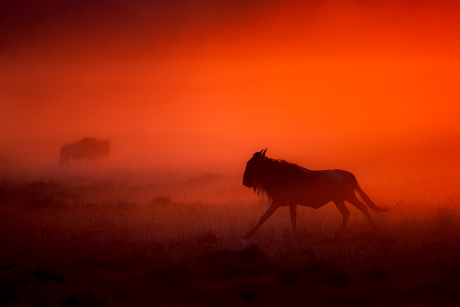 My Africa 1 by catman-suha
