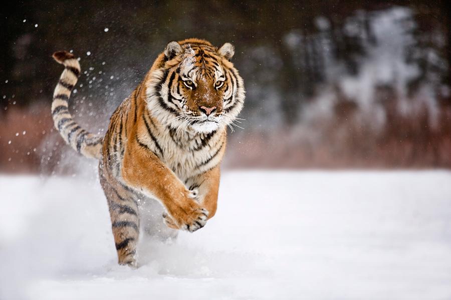 Animales que podrían Extinguirse a finales de este año.