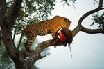 wildlife by catman-suha