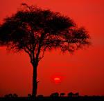 Masai Mara by catman-suha