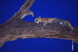 sleep well by catman-suha