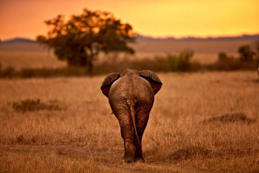 My Africa 16