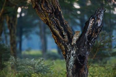 Leopard 10 by catman-suha