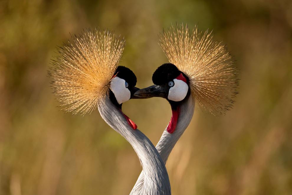 природа фото птицы
