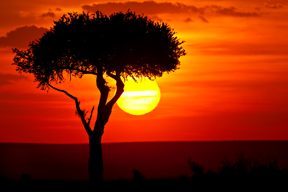 My Africa 36 by catman-suha