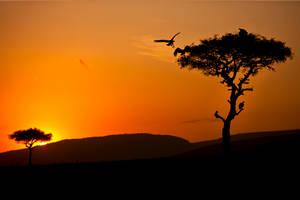My Africa 48