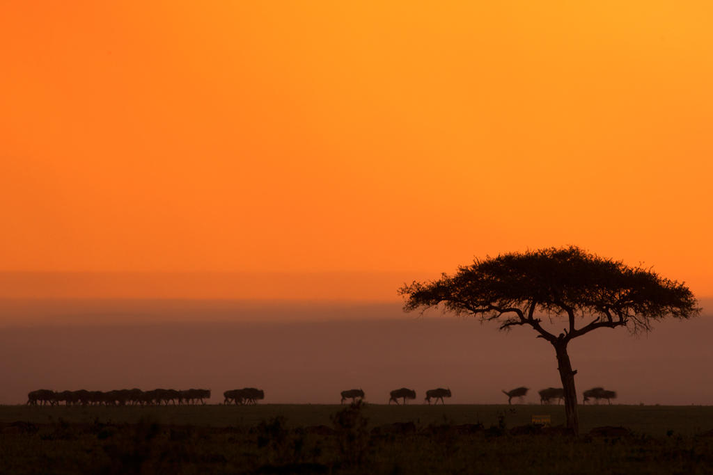My Africa 46 by catman-suha