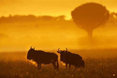 My Africa 55 by catman-suha