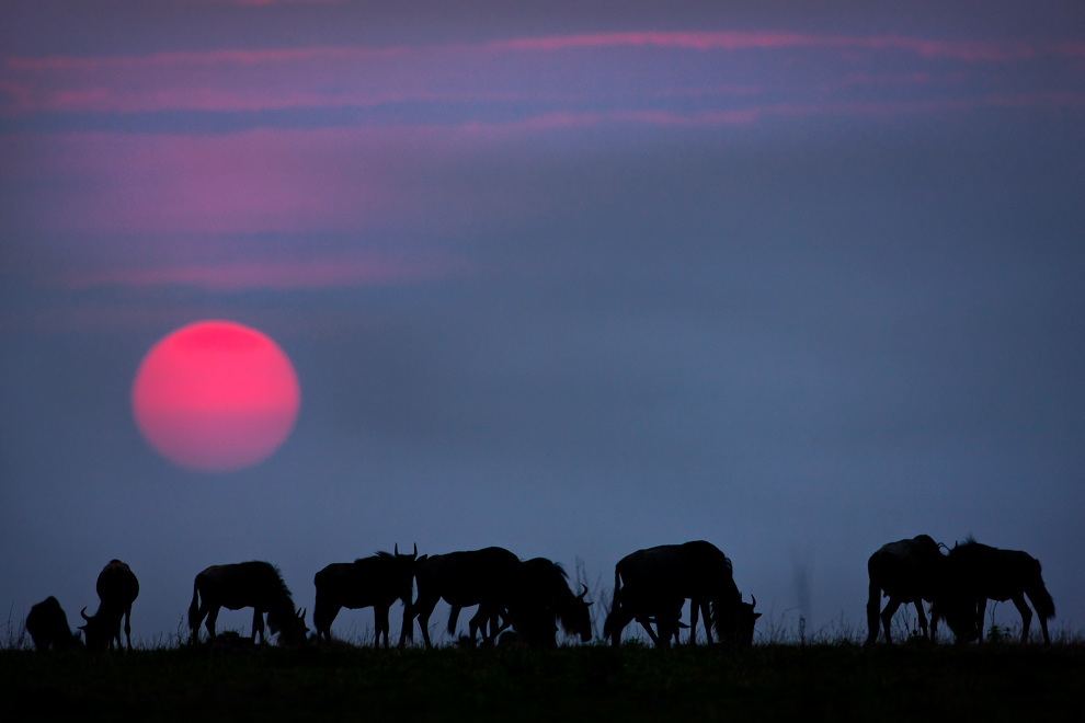 My Africa 58 by catman-suha