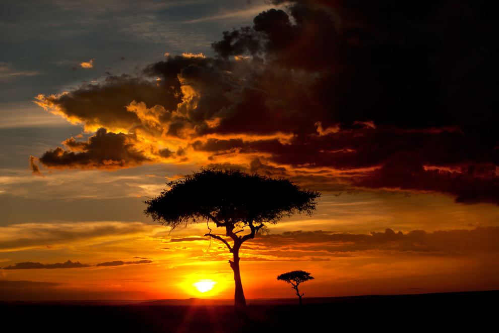 My Africa 62 by catman-suha