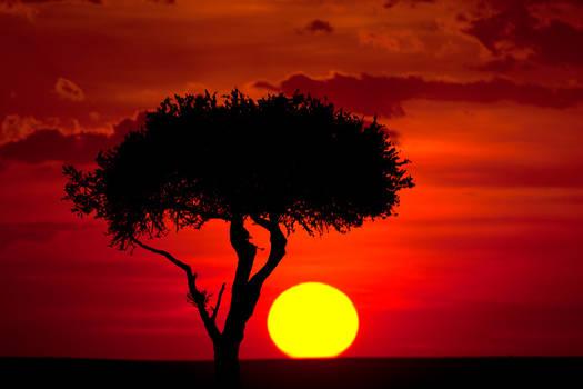 My Africa 64