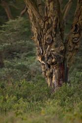 Leopard 48 by catman-suha