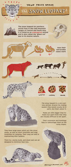 True Facts About the SNOW LEOPARD!