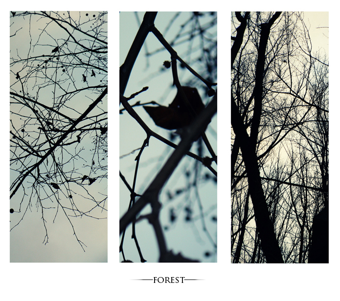 Forest by LSDsuicide