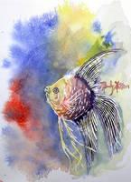 Watercolor angelfish by mandylynn