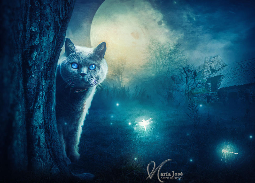 Surprise at night by Eithen