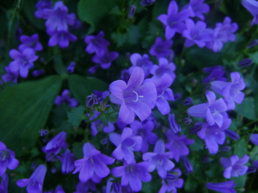 Purple Invasion by BansheeHowl