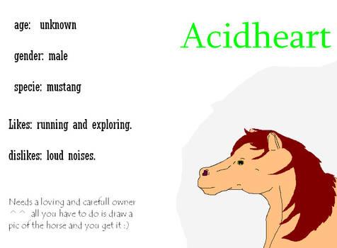 Horse for Adoption
