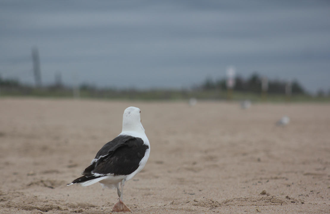 Looking off - Gull by NocturnalScribe