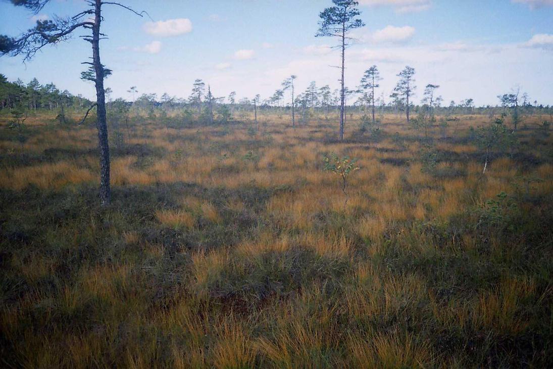 swamp pic 5 by piraaja