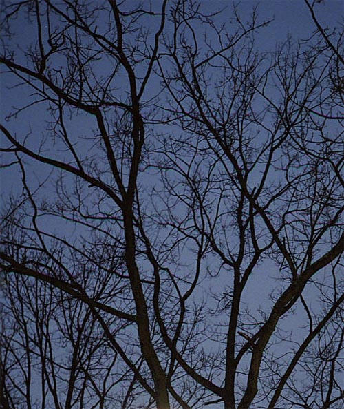 branches and sky by piraaja