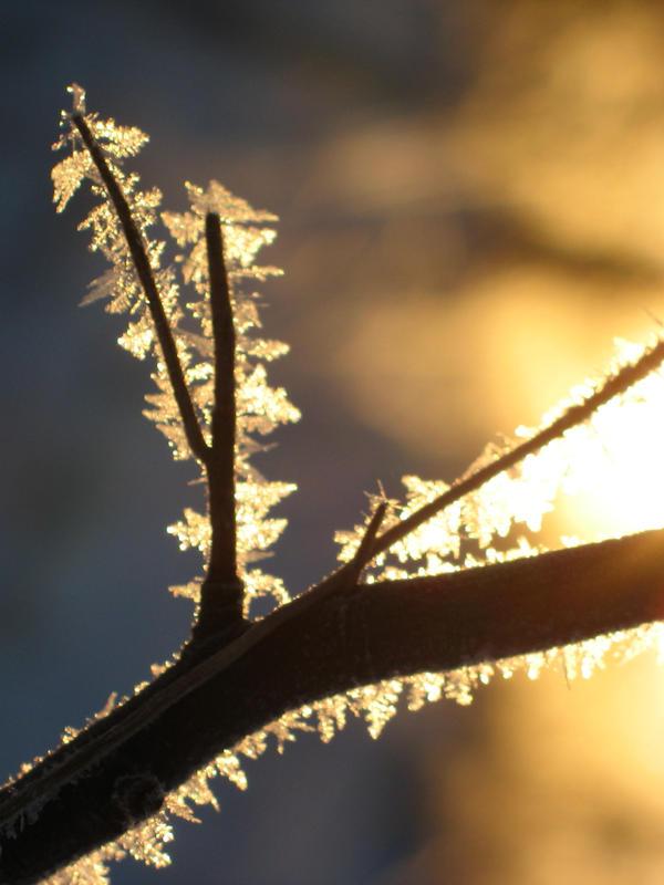 Winter sun by piraaja