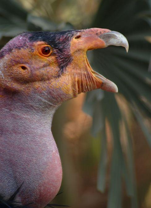 Nomor Condor by speciata