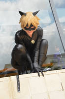 Chat Noir cosplay