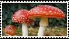Amanita muscaria stamp