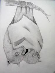 Sleep Stellaluna by derekdean