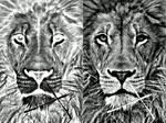 Majestic Lion -Invert pencil art